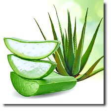 _TAKA Ingredient #5 aloe